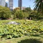 Der Botanische Garten ist aber auch wirklich grün zurzeit.