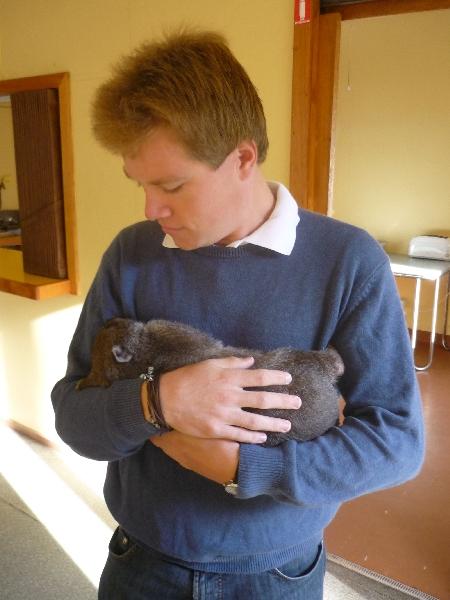 Auf meinem Arm: ein junger Wombat. Sehr kuschlig. Kein Wunder, denn eigentlich leben sie in diesem Alter auch noch im Beutel der Mutter. Da diese Mutter allerdings leider von einem Auto überfahren wurde, durfte ich Ziehvater spielen. Ausgewachsene Wombats habe ich auf Tasmanien zwar auch gesehen, allerdings leider nicht fotografiert. Vielen Dank an Dave für dieses Foto.